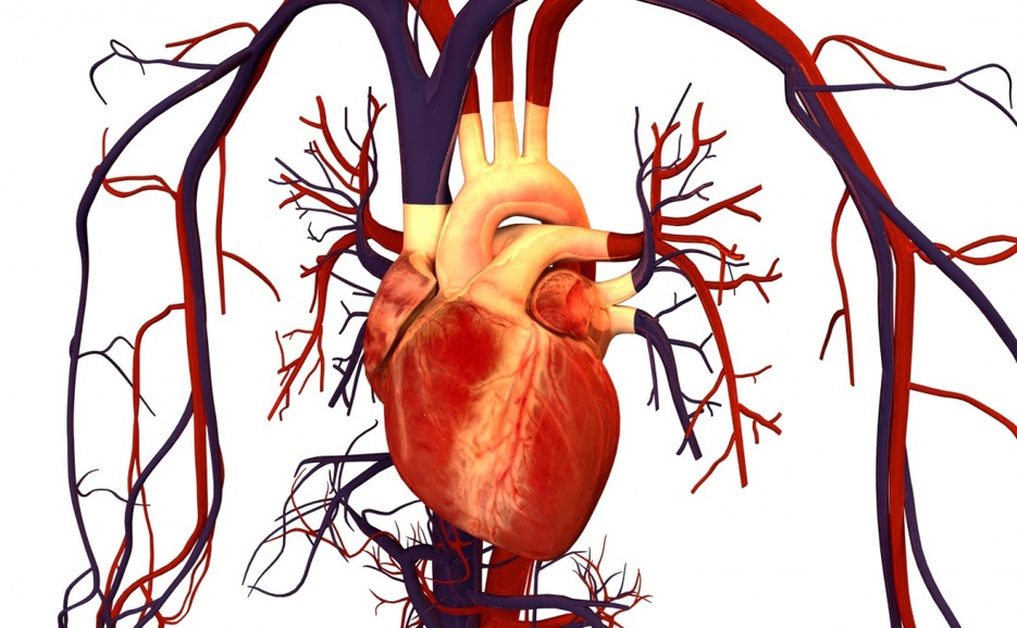 Houston Biotech Nets $10M to Develop Circulatory Support Device | Xconomy